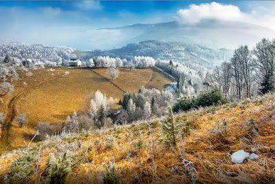 Un día nevado - Frozen day - Árboles blancos | Banco de Imágenes