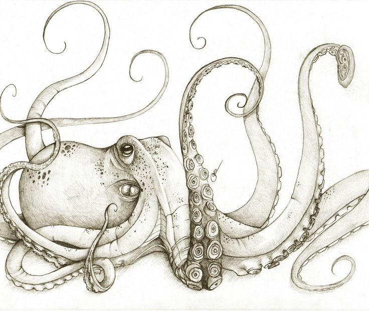 Best 25 Octopus tattoo design ideas on Pinterest Octopus tattoo