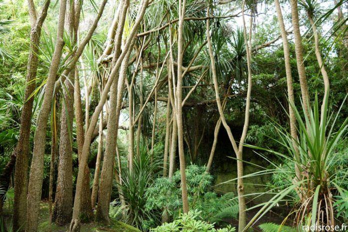 Le Jardin Botanique De Vauville Dans Le Cap Cotentin Jardins
