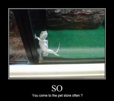 Somebody get me that lizard.