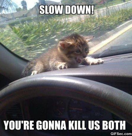 Top 30 Funniest animal pics with captions