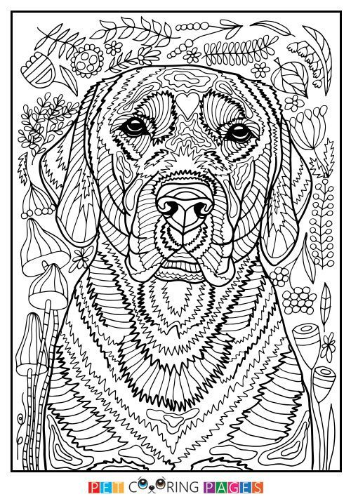 Free printable Labrador Retriever coloring page available for download. Simple and detailed versions for adults and kids.