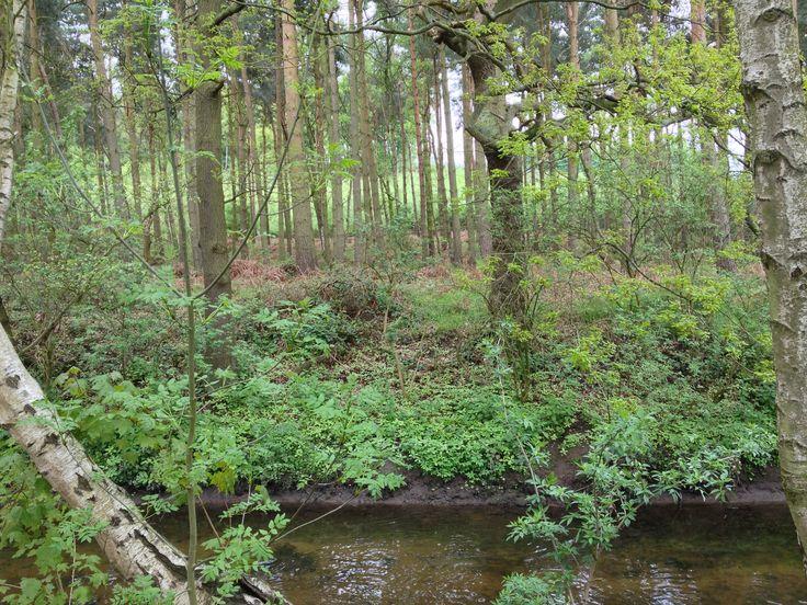 Sherwood Forest, Nottingham.