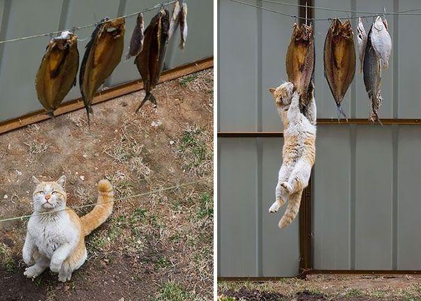 Un étalage de poissons pour ce chat gourmand