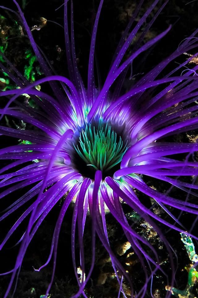 ☆☆Anemone's are so beautiful, as are so many things from under the sea. Thanks to modern technology we can now share their beauty☆☆