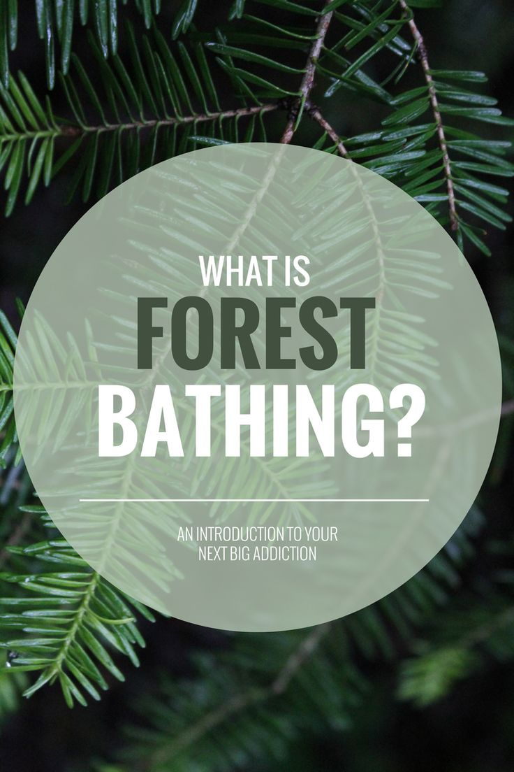 Forest Bathing Nature S Path Blog