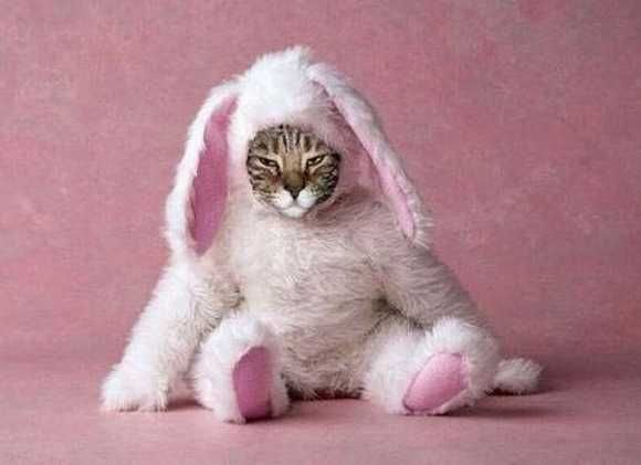 Best Cats Images On Pinterest Kitty Cats Animals And Cats - 29 adorable animals that will put a smile on your face