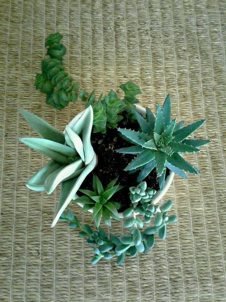 Succulents in a ceramic planter from a small online plant nursery in Phoenix, AZ. Local meetup by appointment, or delivery may be possible for sizable orders.