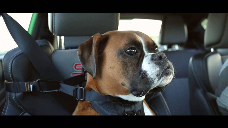Wenn Drift Champion Vaughn Gittin Jr. mit seinem Hund zum Einkaufen fährt… und dann noch eine kleine Runde im Ford Fiesta ST dreht. Schatz, der Hund wollte das so!!