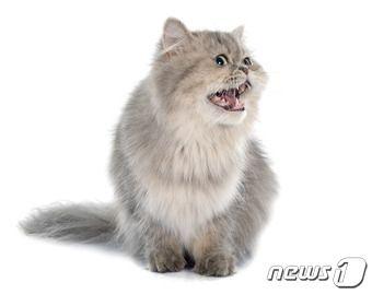 """""""귀여워서…"""" 이웃집 페르시안 고양이 들고간 20대"""