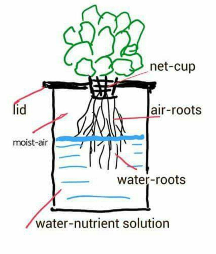 Simple hydroponics: Kratky Method Explanation                                                                                                                                                                                 More