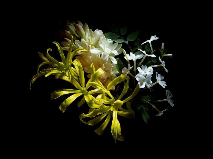 #BLOOMATNIGHT  Fragrances that come from night flowers – Sambac Jasmine, Tuberose and Ylang Ylang