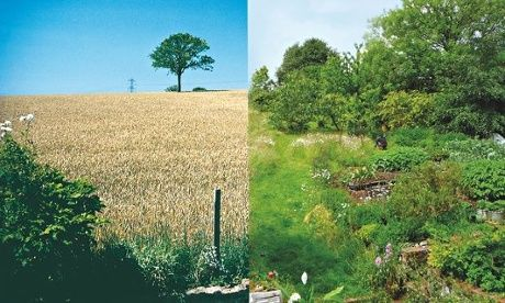 How we made a garden of edible delights: monoculture to permaculture--Maddy Harland on growing an extraordinary range of food when a field of poor soil was transformed into a permaculture paradise