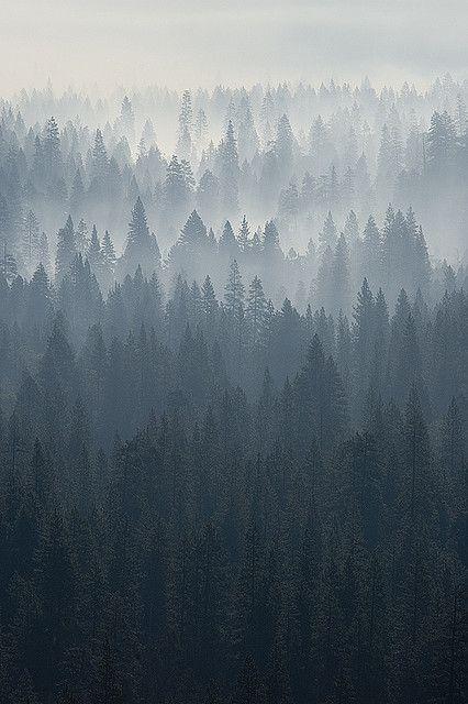 Yosemite morning - smoking valley   Flickr - Photo Sharing!
