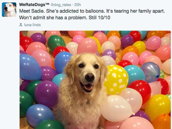 'We Rate Dogs' isn't the Twitter account we need, it's the Twitter account we deserve : theCHIVE