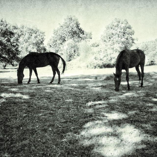 Koně v Loutí