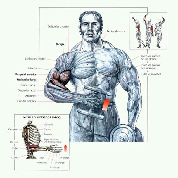 Ejercicios para biceps www.mancave.com.ar