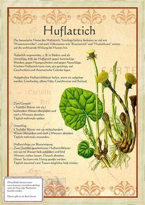 Huflattich http://www.kraeuter-verzeichnis.de/