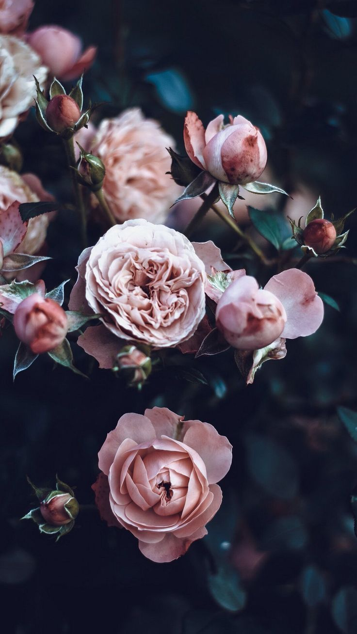 New Nature Wallpaper Download Free 4k Full Hd Wallpapers Background Images In 2020 Peony Wallpaper Pink Wallpaper Iphone Flower Wallpaper
