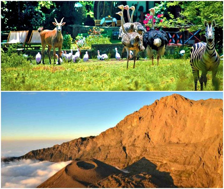 #MountMeruClimb is another prime attraction for adventure and nature lovers. It is a spectacular mountain with amazing #Scenery and #Wildlife. Know more @ http://trekiliecoexpeditions.weebly.com/blog/is-mount-meru-climb-a-thrilling-adventure