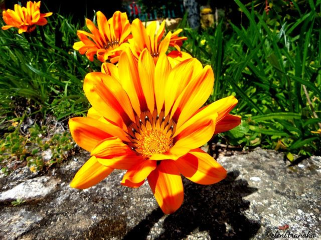 Ελένη Τράνακα: Φύση / Nature