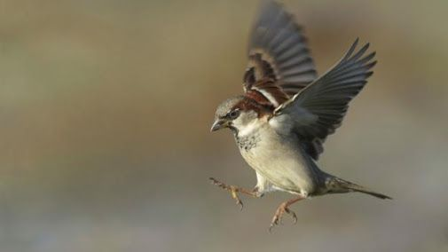 Best Food For Baby Sparrows