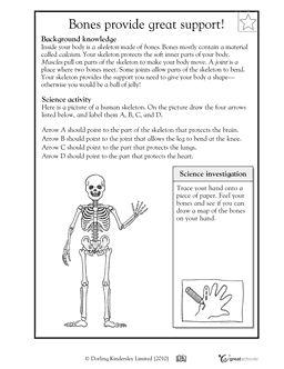 bones provide great support see the skeleton your bones