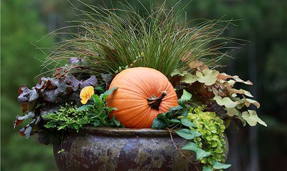 Filling Those Fall Containers - Monrovia Nursery
