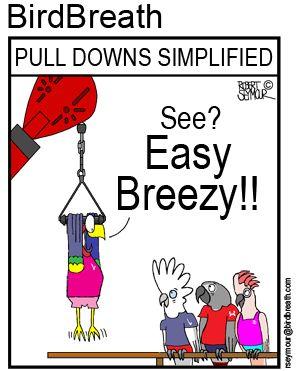 Pull Downs Simplified!! #bird #cartoon #parrot BirdBreath.com