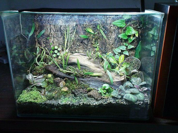 MAC Forum 2.0 • View topic - My first terrarium (Orchid's Cradle) - 59 Best Reptile Terrarium Inspiration Images On Pinterest