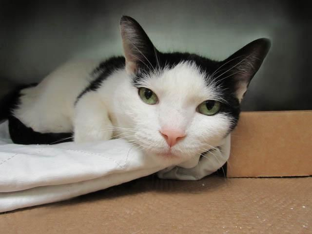 JAE -  A1090869 - - Brooklyn  *** TO BE DESTROYED 10/08/16 *** ABANDONED ON A TERRACE…..That's right, lovely five year old JAE was found on a building terrace…. Well, tonight she needs to go to a nice, warm home ….no more admiring the view!! JAE is AVERAGE rated and SPAYED…SHE'S A SWEETHEART!! Need we say more?? Yes, we need to say that JAE only has until NOON tomorrow….DON'T WAIT, APPLY TO FOSTER OR ADOPT HER NOW!! Please Sha
