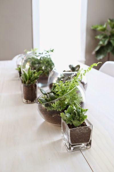 ideas con plantas para decorar