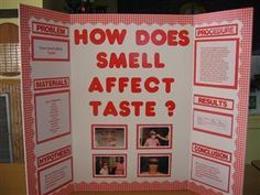 Best 25+ School Science Projects ideas on Pinterest | Science fair ...