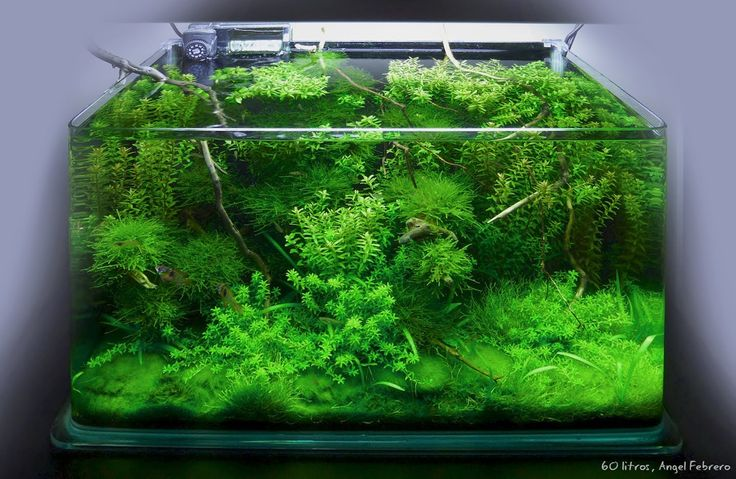 Best ideas about acuario agua dulce on pinterest