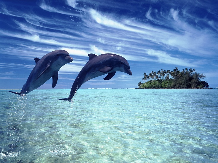 pictures of the ocean | Cheerful dolphins in the sea iPad Wallpaper, New iPad 3 | Wallpapers ...