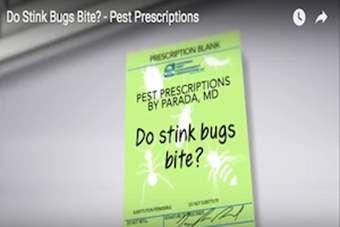 Pest Prescriptions - Do Stink Bugs Bite?