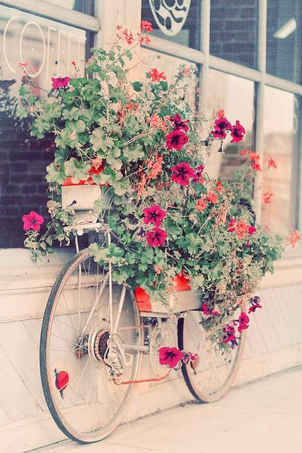 Flowers springing out of a bicycle.  Too cute.