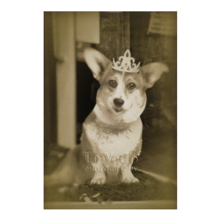 Royal Corgi Photo British Royal Family Crown Dog Photograph Humorous Shop Window London Olympics Pet Photography Salisbury England. $27.00, via Etsy.
