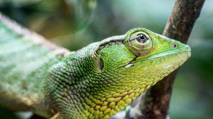 #lizard #colombia #parqueexplora