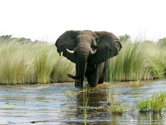 Olifant, Kafue National Park, Zambia #Zambia #Kafue National Park http://www.mambulu.com/safari/zambia/reissuggesties-zambia/36-luxe-safari-zuidwest-zambia.html#dag-7-south-kafue-national-park,-nanzhila-plains