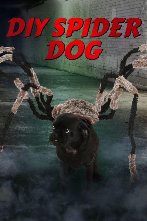 Spider Dog Halloween Costume tutorial