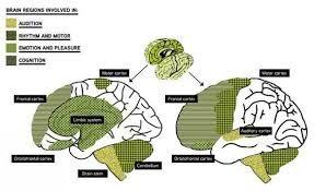 Billedresultat for hjerne grafik