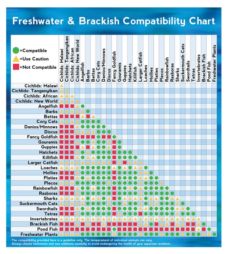 17 best images about brackish aquarium on pinterest for Tropical fish temperature chart
