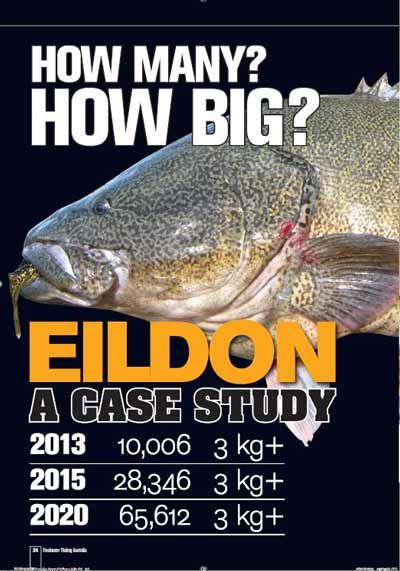 Removal of closed season for Murray cod at Lake Eildon - http://afn.com.au/removal-of-closed-season-for-murray-cod-at-lake-eildon/