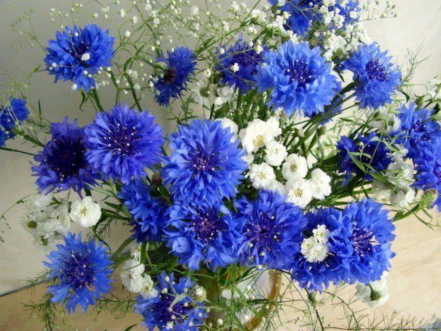 Букеты цветов фото красивые, качественные и оригинальные.