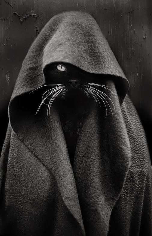 Je suis ton chat ......