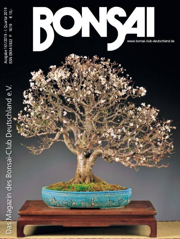 Prunus Cerasifera Bonsai By Marija Hajdic Meleda Bonsai Studio Bonsai Bonsai Tree Prunus
