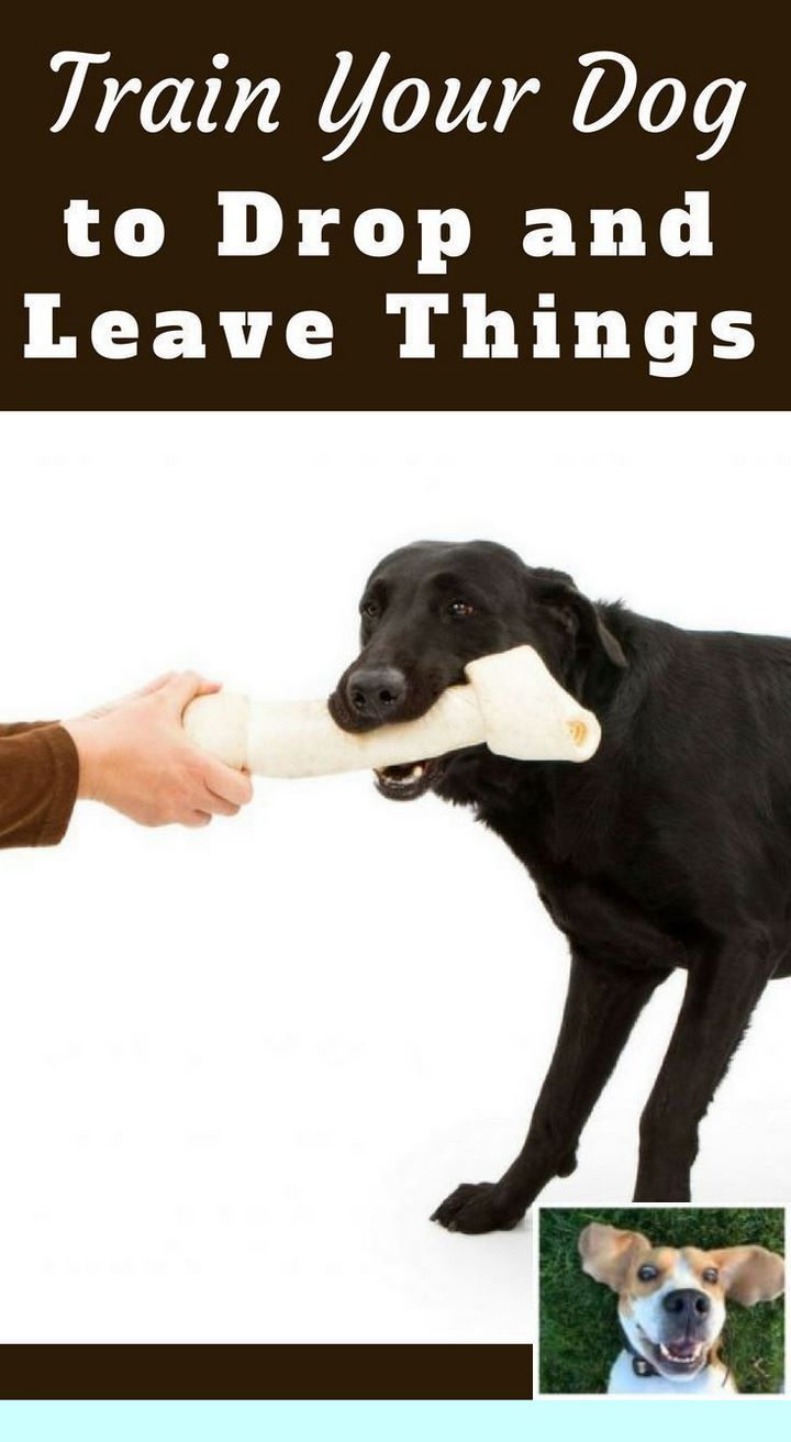 Teach Your Dog Attack On Command Dogtraining And Dog Hacks