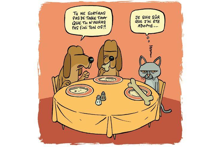 1000 citations d 39 adoption sur pinterest adoption famille d 39 accueil et annonces d 39 adoption - Les chiens ne font pas des chats ...