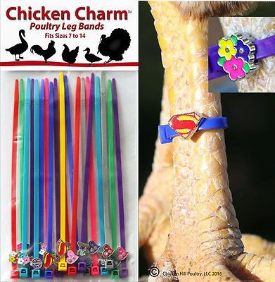 Chicken Charm ™ Poultry Leg Bands ~Fits Chickens,Geese,Ducks